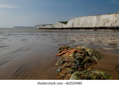 Two Starfish on the beach by the Seven Sisters