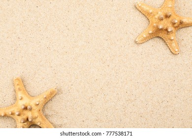 Two starfishes on a beach sand, copy space