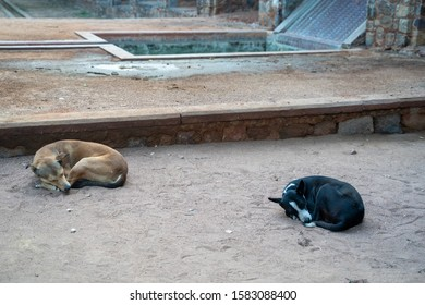 Two stray dogs (street dogs) curled up into tiny balls and sleeping, in the Humayans Tomb complex in New Delhi India