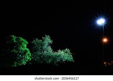 Two streetlamps focusing two trees