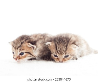two striped kitten on a white blanket