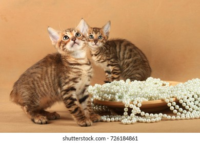 Two striped kittens sit near a plate with pearls and looking up