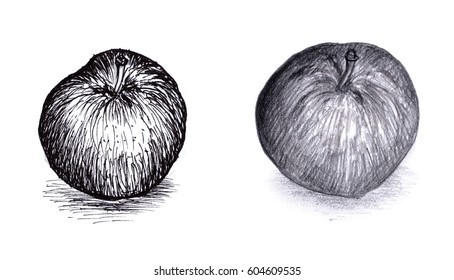two styles apple sketch -ink and pecil