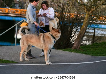 Two stylish women share shopping experience on the sidewalk, holding a golden brown German Shepherd on leash in Cluj-Napoca, Romania, March 23, 2019