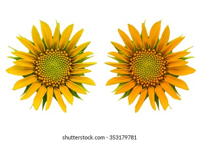 Two Sunflower isolate on white background