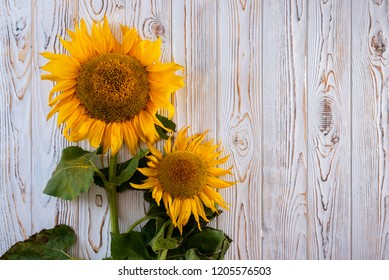 two sunflowers on the table