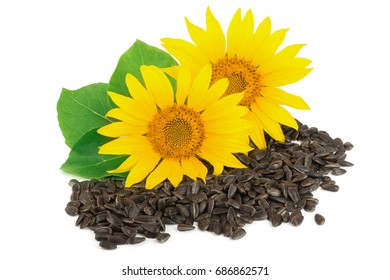 Two sunflowers with seeds and leaves isolated on white background
