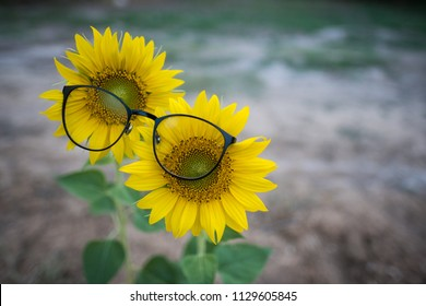 Two Sunflowers Wearing a Pair of Eyeglasses