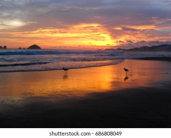 Two sunset birds. Ixtapa-Zihuatanejo. Pacific. Nature of Mexico. North America