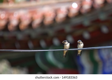 Two swallow birds on wire in summer
