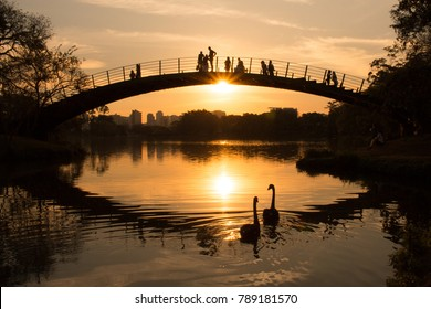 Two swans at the lake while people watch the sunset, Ibirapuera Park, Sao Paulo, Brazil