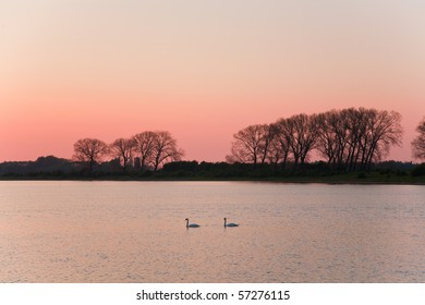 Two swans on the lake. Netherlands