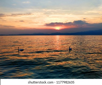 Two swans swim in the lake at sunset. The water of the lake is orange under the sun. The sky is a bit cloudy.