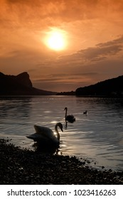 Two swans are swimming along the shore of lake Mondsee in Upper Austria in the evening before sunset.