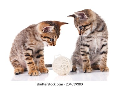 two tabby kittens with a ball on a white background