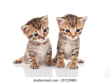two tabby kittens sitting on white background
