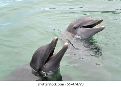 Two Talking Dolphins, The Bahamas