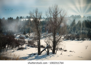 Two tall and bare trees stand in glory where the wilderness meets a snow-covered field. Sun rays shine brightly through fog and the branches of pine trees that line the mountainside.