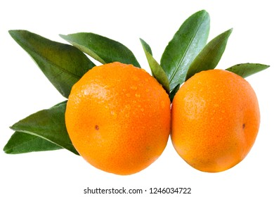 Two tangerine with leaves isolated on white background