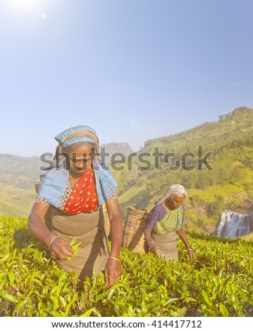 Two Tea Pickers Picking
