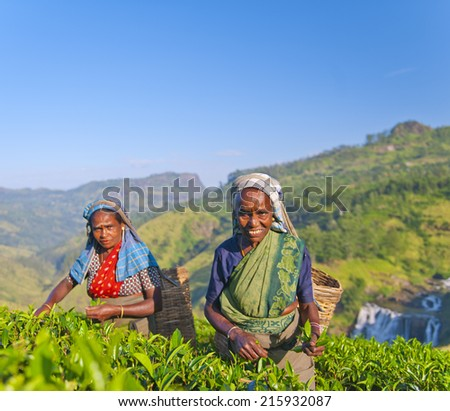 Two tea pickers smile