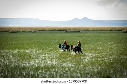 Two teenagers are riding two donkeys through a green valley covered with water and long grasses. Boys riding mules in a valley with mountain background.