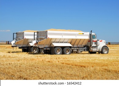 """Two """"Ten Wheeler"""" trucks loaded with grain wait in a patch of barley """"stubble"""" before being driven to storage."""