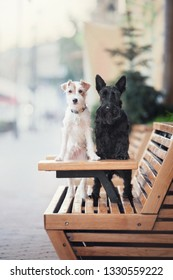 Two terrier dogs stand with their paws on a wooden table in a cafe.