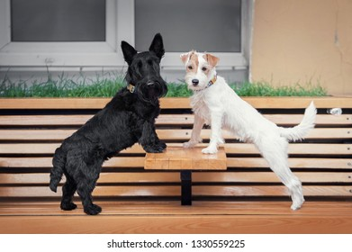 Two terrier dogs stands on a cafe bench