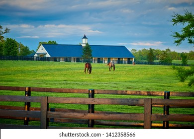 Two thoroughbred horses grazing in a field with horse barn in the background.