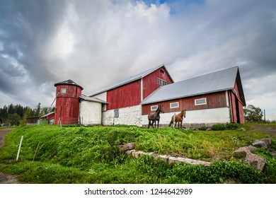 Two thoroughbred horses stand together outside a vintage barn and silo at a working horse farm in Sipoo Finland.