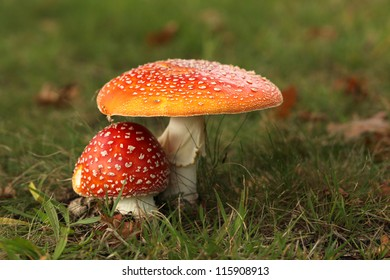 Two toadstools close together
