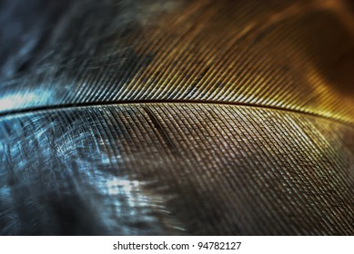 Two Tone Feather