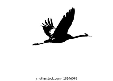 Two Tone Silhouette of Flying Crane