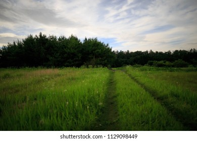 Two track road leads through grassy field into forest at night