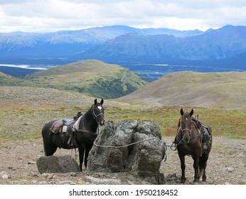 Two trail riding horses tied to rock on plateau