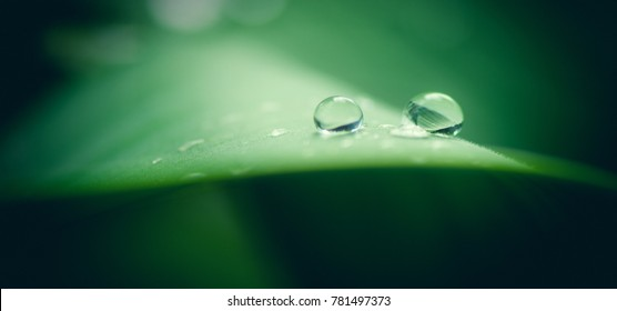 two transparent Drops of water on a green leaf, the green leaf comes from the background to foreground, drops are sharp, macro closeup photo, drops on the right side, the background is green and blur