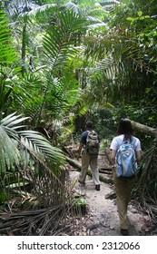 Two travelers jungle-trekking at Bako National Park, Sarawak, Malaysia.