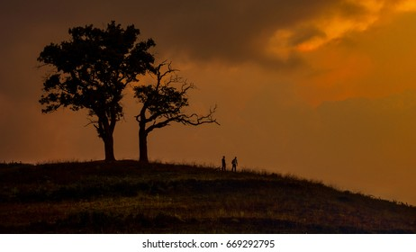 two tree and two man silhouette at sunrise
