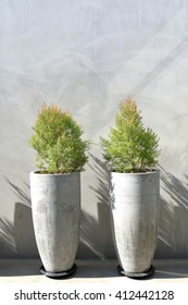 Two tree pots decorated on exterior concrete wall background.