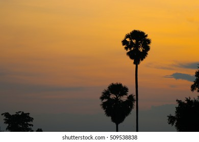 Two tree and the sunset sky gold color, romance time romance of the day