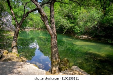 two tree trunks at the edge of a calm and green river