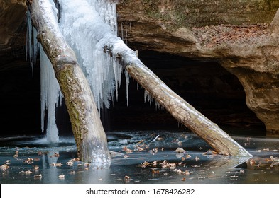 Two tree trunks that washed down a small creek and lodged in a waterfall become part of the icefall in winter, Kaskaskia Canyon, Starved Rocks State Park, LaSalle County, Illinois