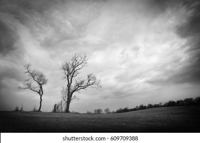 Two Trees Against a Cloudy Sky