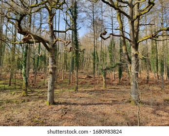 Two trees, almost identical in height and width, compete to see whose branches can be the most gnarled. They extend their arms upwards and outwards, curling and beckoning to the local fauna.