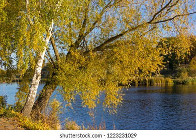 Two trees, a birch tree and a willow tree with yellow leaves, are standing at the riverside.