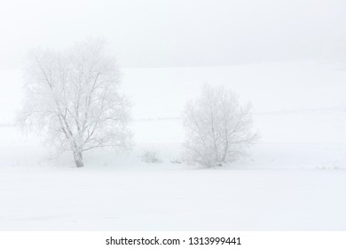 Two trees covered with hoarfrost in a foggy landscape