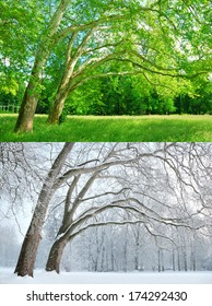 Two trees in two different seasons - Summer and Winter
