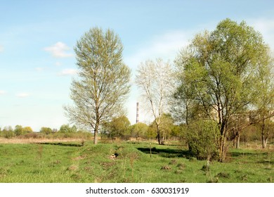 Two trees in the field, spring, suburb, , spring landscape, poor field has a few trees, the ground is covered with peat, three on the tree, one tree dry