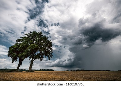 Two trees in a fields in front of dark stormy cloud